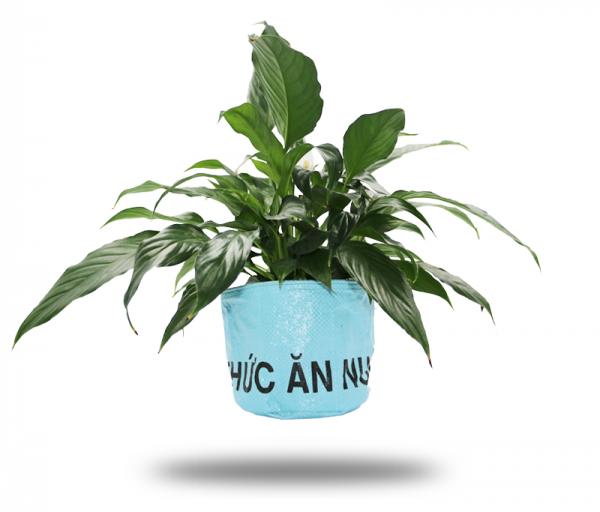 ISYbe Bags Pflanzenkübel / Aufbewahrungskorb - blau mit Pflanze