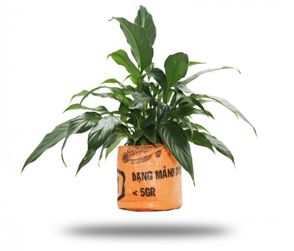 ISYbe Bags Pflanzenkübel / Aufbewahrungskorb - orange mit Pflanze